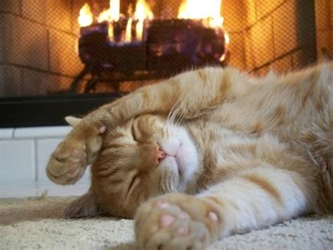 warmkitty.jpg