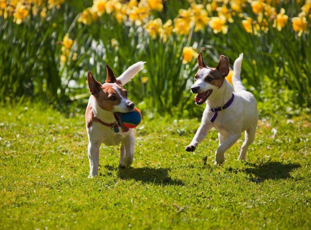 dogsinspring.jpg