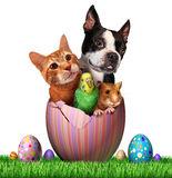 Easterpets.jpg