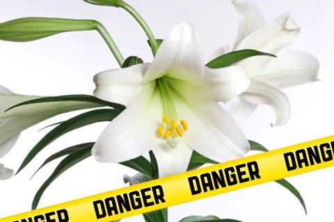 easterlilies.jpg