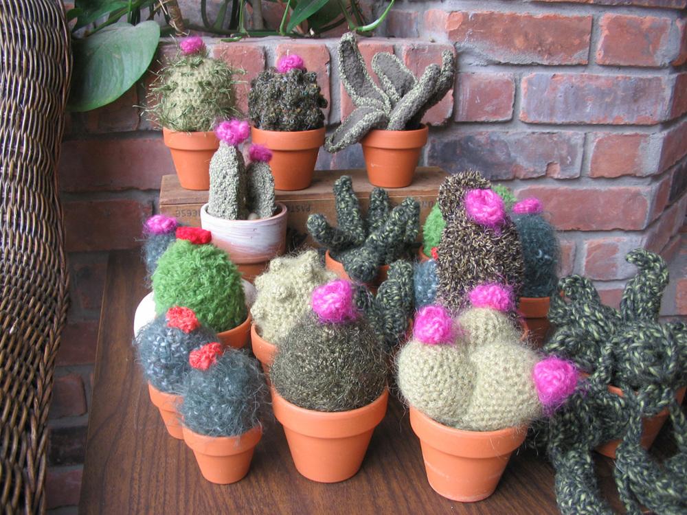 cacti_group2.jpg