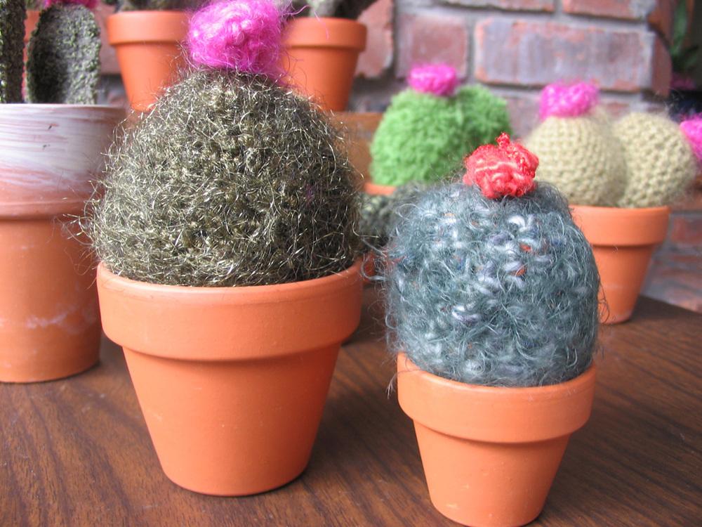 cacti_pair.jpg