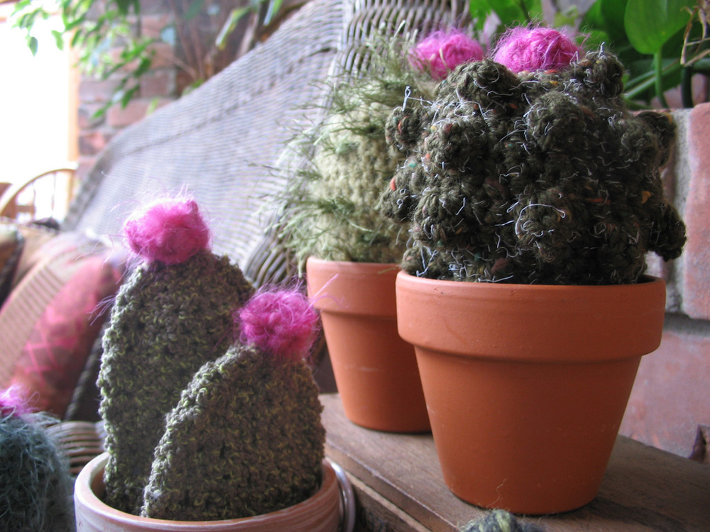 cacti_group4.jpg