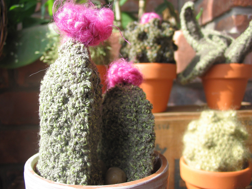 cactus_flat_pair.jpg