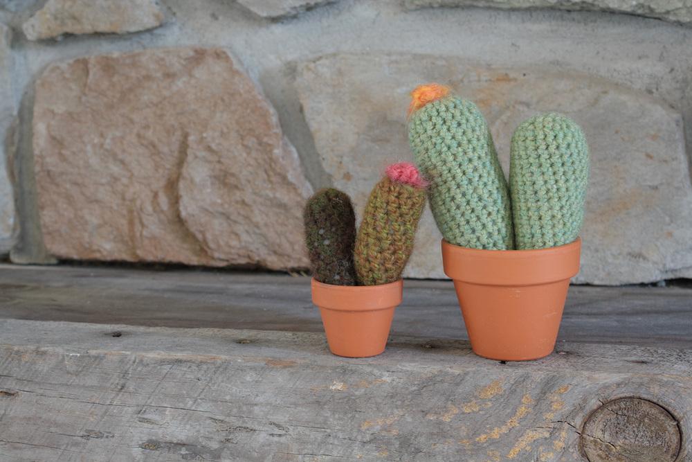 cacti005.jpg