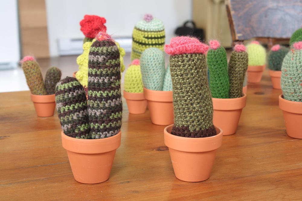cacti008.jpg
