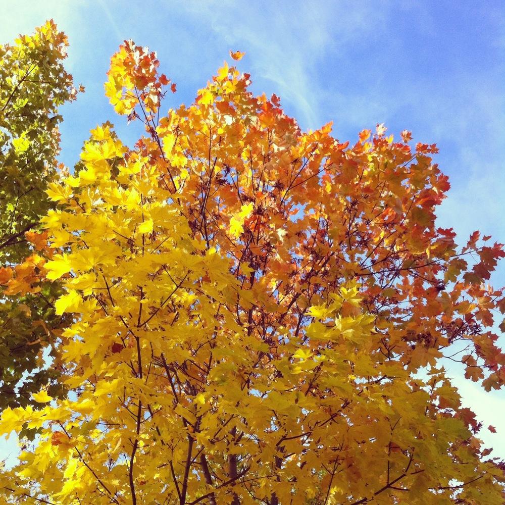 Søndag. Oktober. Høst. Sol. Fargespill