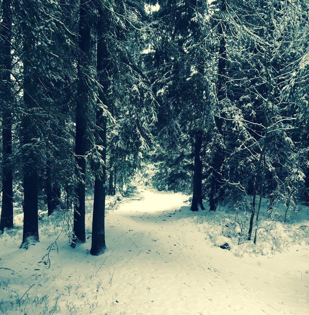 Stiløping kan være helt fantastisk når den første snøen har lagt seg - ingen gjørme, bare hvitt og fint!