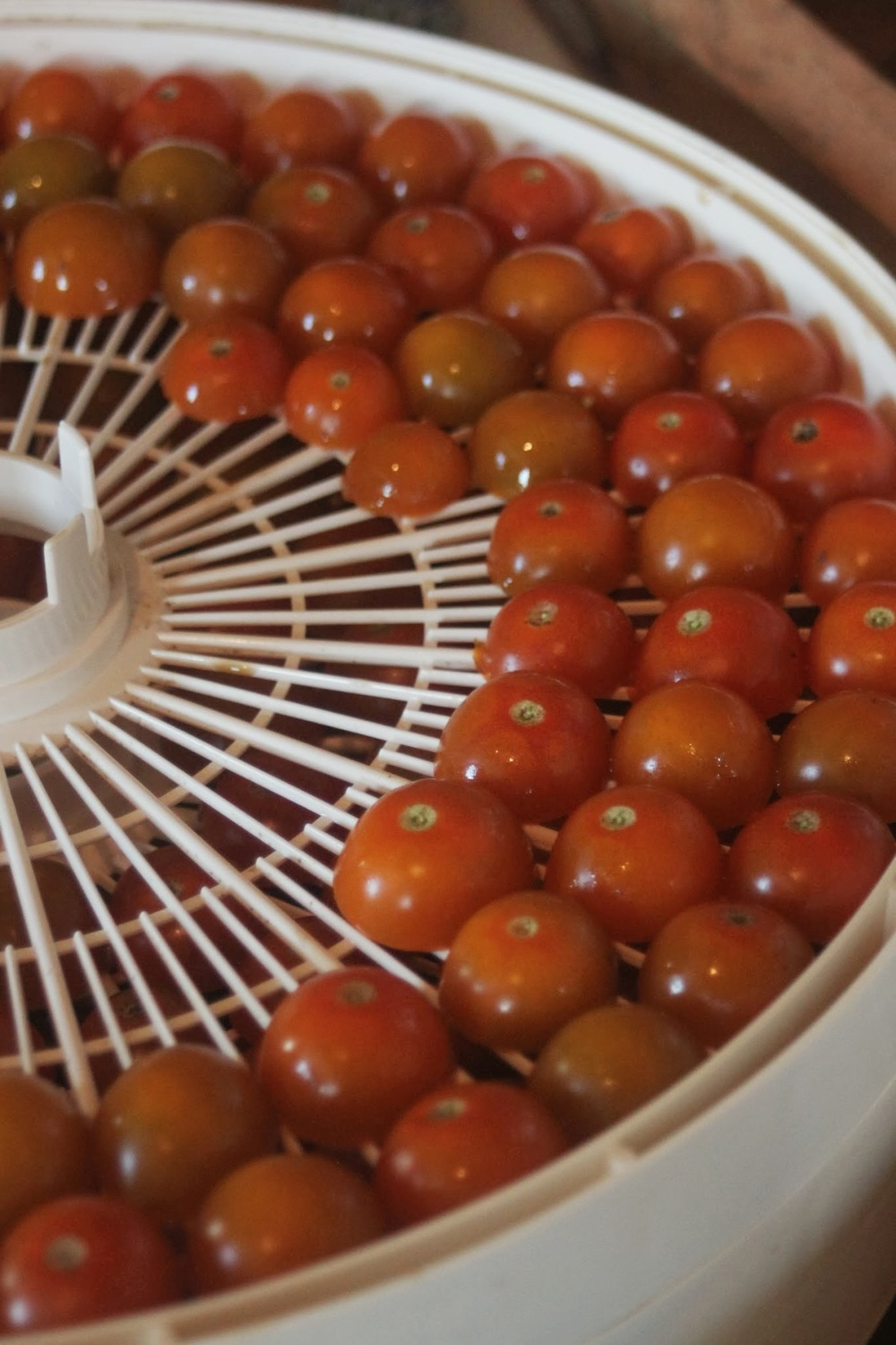 dehydrating tomatoes.jpg