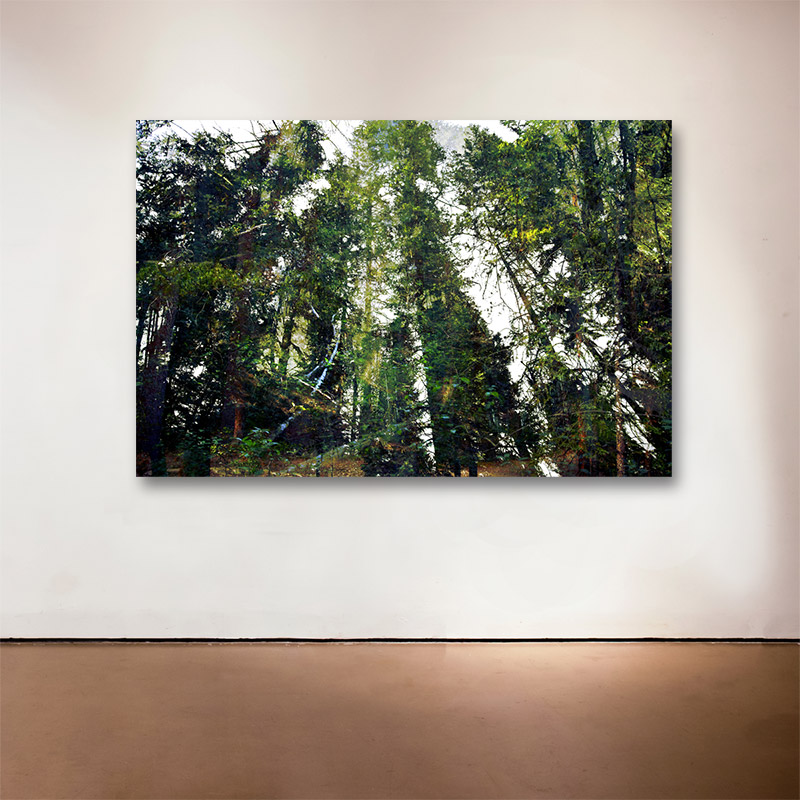 "Forest Walk 2 , 2013 Medium: Archival UltraChrome Inkjet Print  Dimensions and Edition Size:   20 x 30"", Edition of 30 