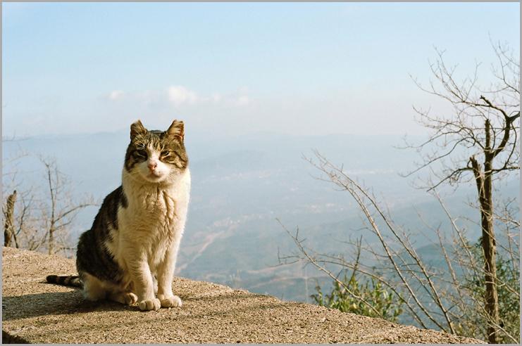 Monastery Cat  Monastery Cat