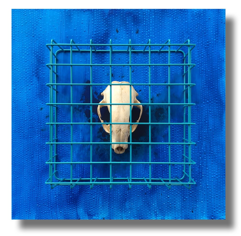 Blue #8 - Endangered, Caged and Extinct Blue Mood