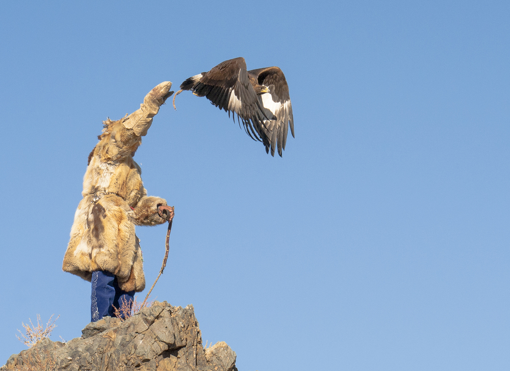 kazakh eagle hunter releasing eagle from top of mountain.jpg