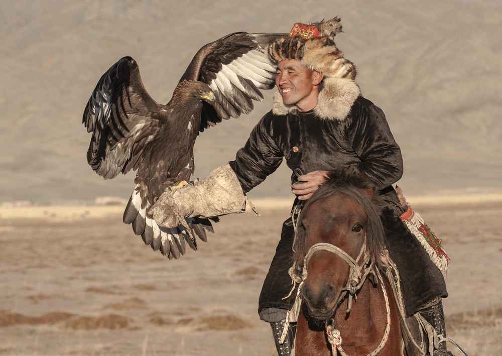 golden eagle landing on kazakh eagle hunter arm2.jpg