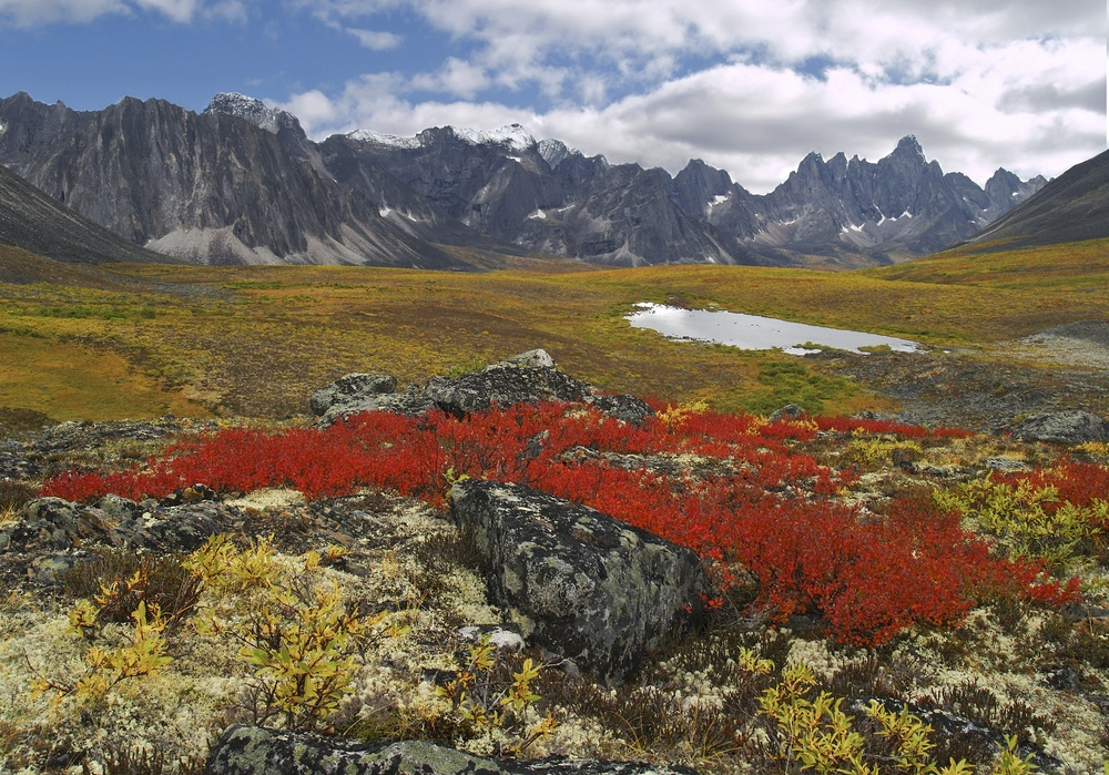 An example of the fall colours that can be seen in the Yukon at this time of year.