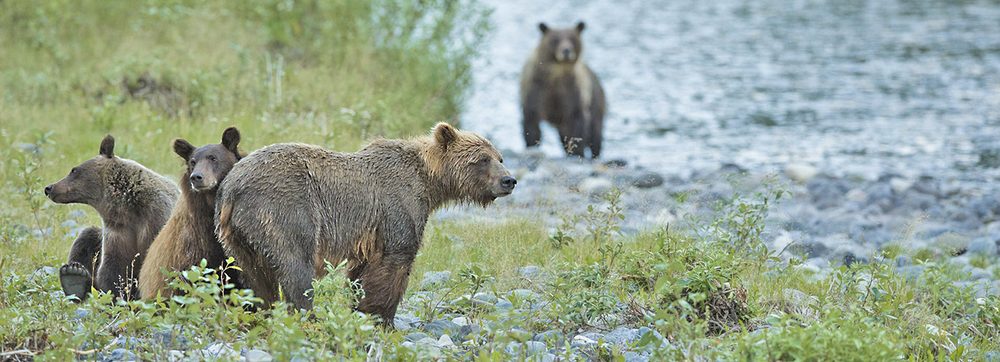 grizz family web.jpg