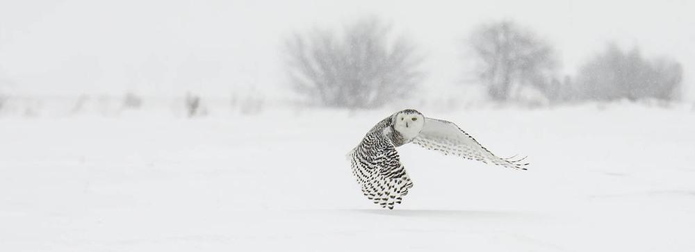 snowy launching.jpg