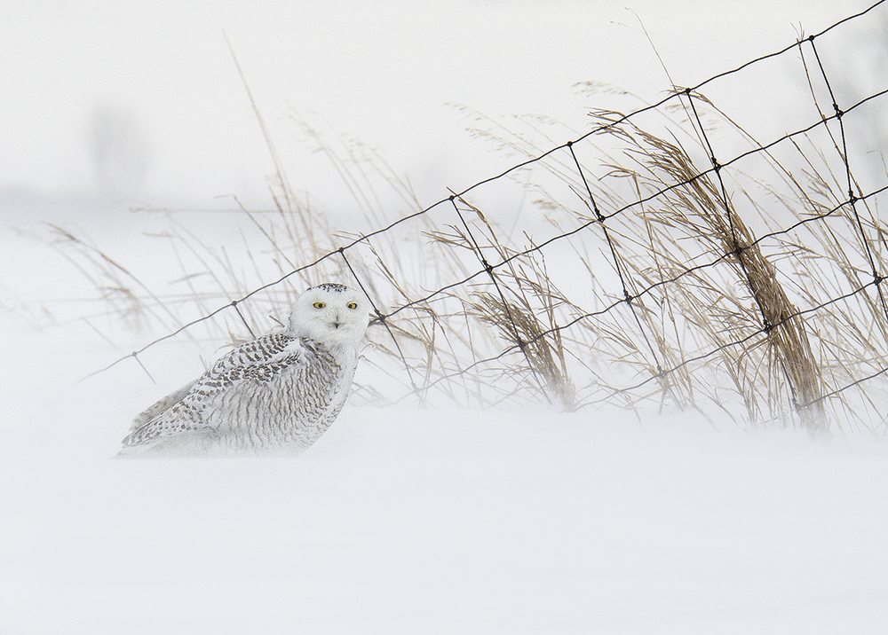 perched in snow.jpg