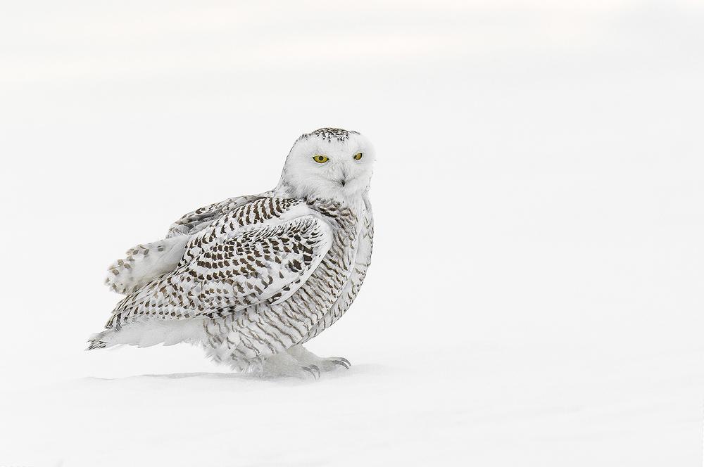 snowy portrait.jpg
