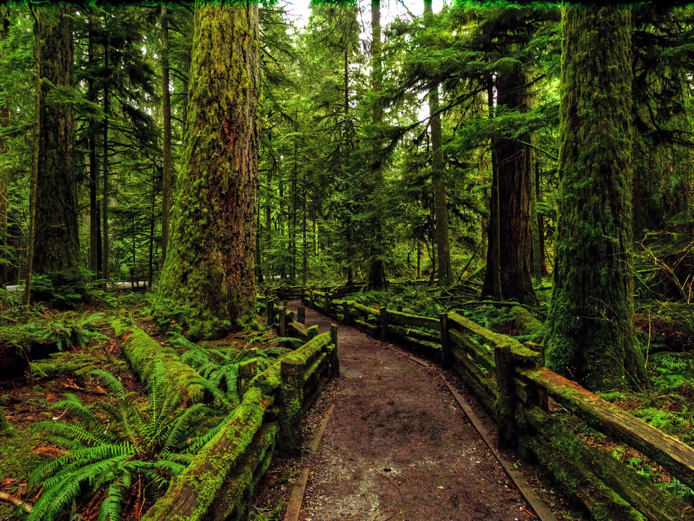 cathedral grove.jpg