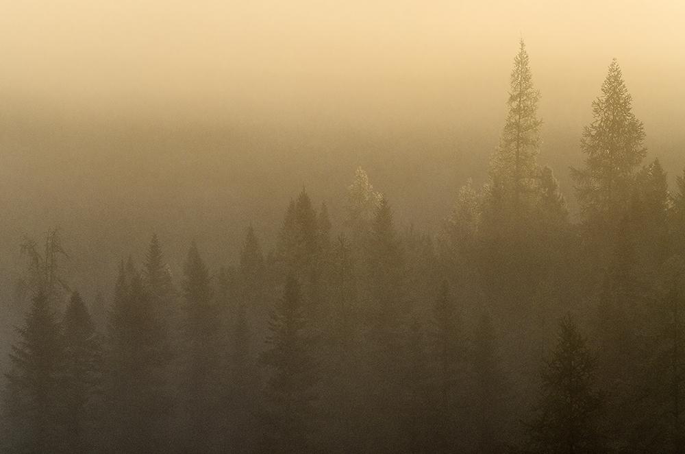 foggy algonquin morning.jpg