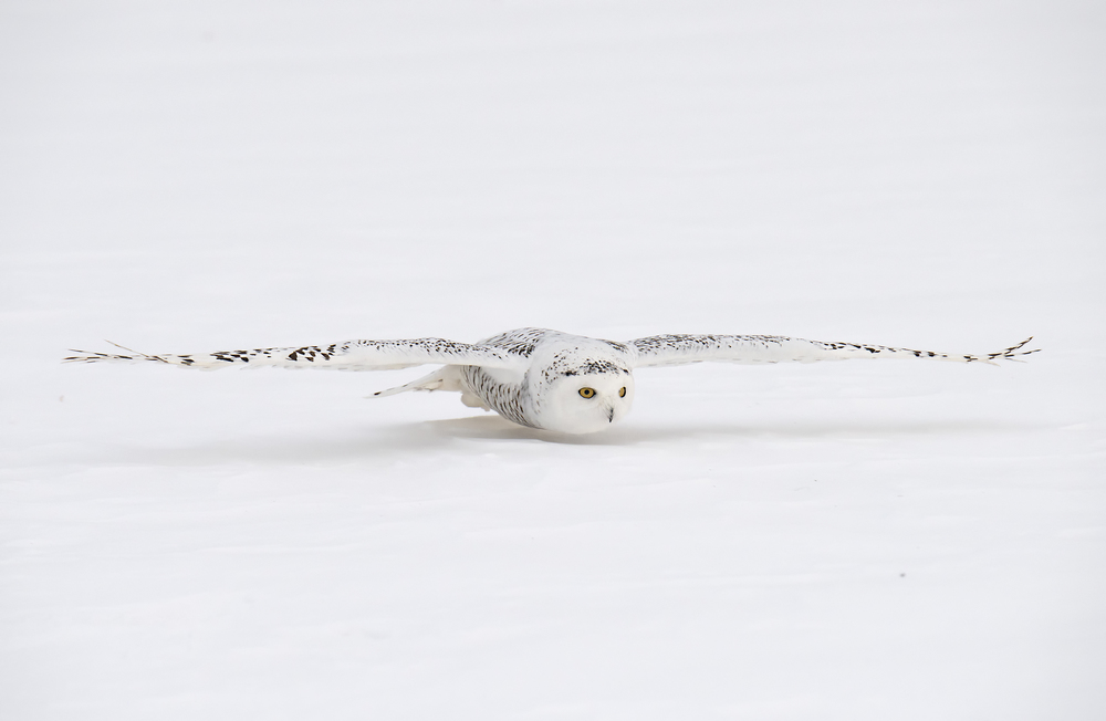 2016_Snowy Owl_Workshop week one_9_web.jpg
