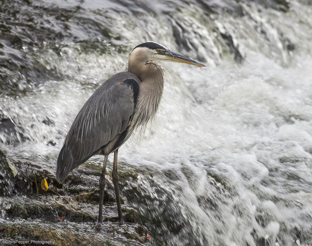 Fishing on the rivers edge.jpg