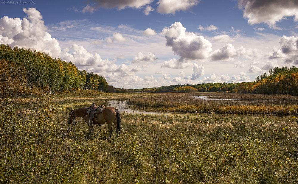long meadow Chris Pepper .jpg
