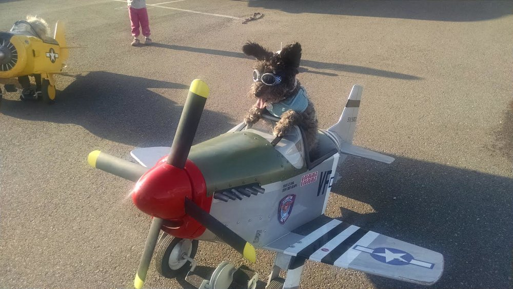 FLYDAY DOG.jpg