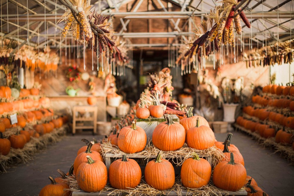 Day 119 - September 27, 2016  I love my farm store all year round but I love it even more during the fall and Christmas seasons. It is so festive and I have the hardest time refraining from buying all of the beautiful pumpkins, mums, and decor.