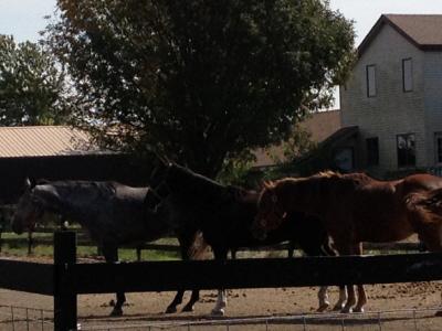 3 horses in line.JPG