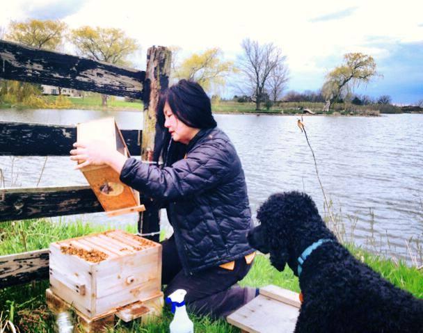 installing bee in hive.jpg