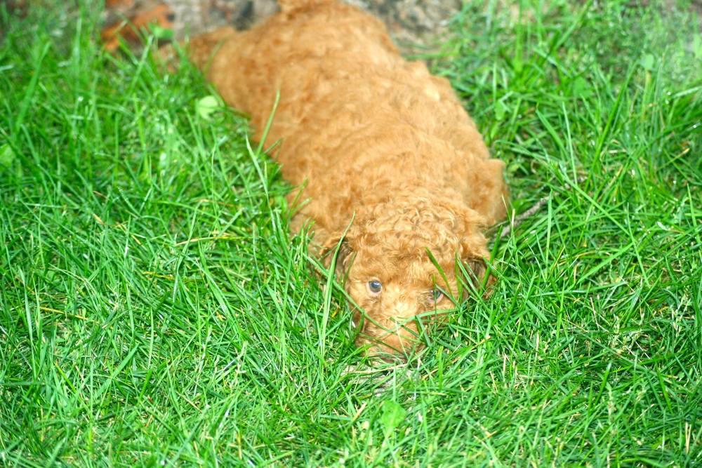 hiding grass cooper.jpg