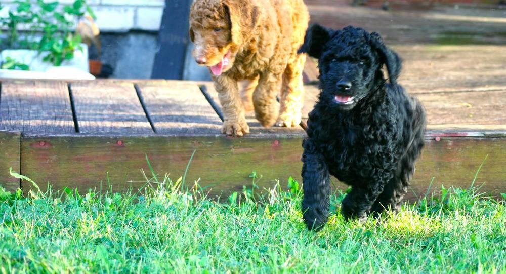 puppy running.jpg