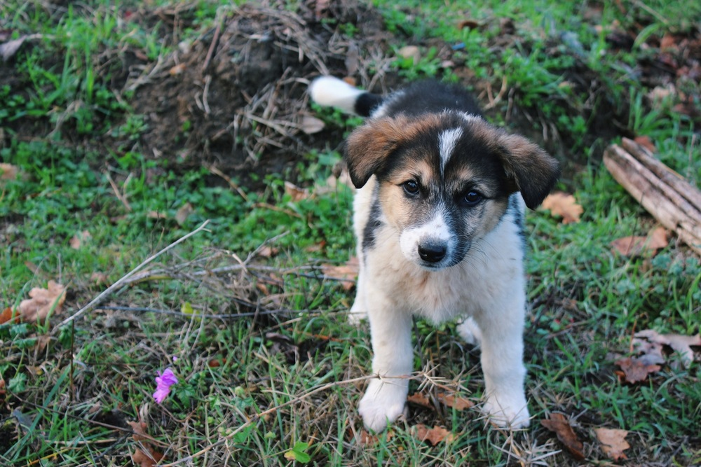 Greek Stray Puppy