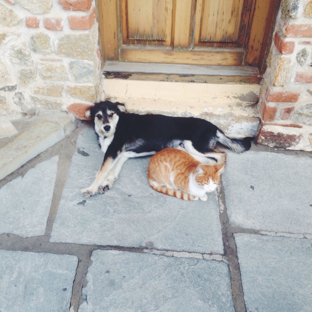 Greek Stray Cat + Dog