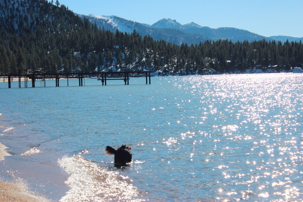 Lake Tahoe Dog Swimming