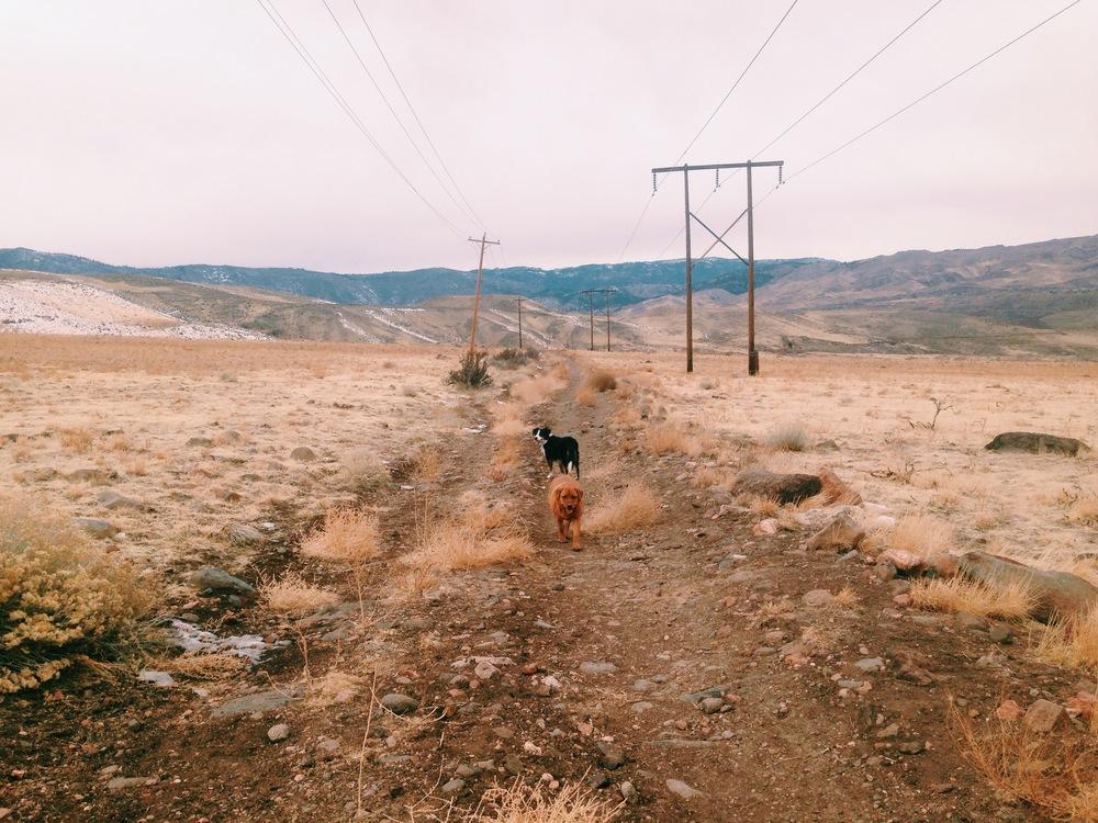 Dog Hike in Reno