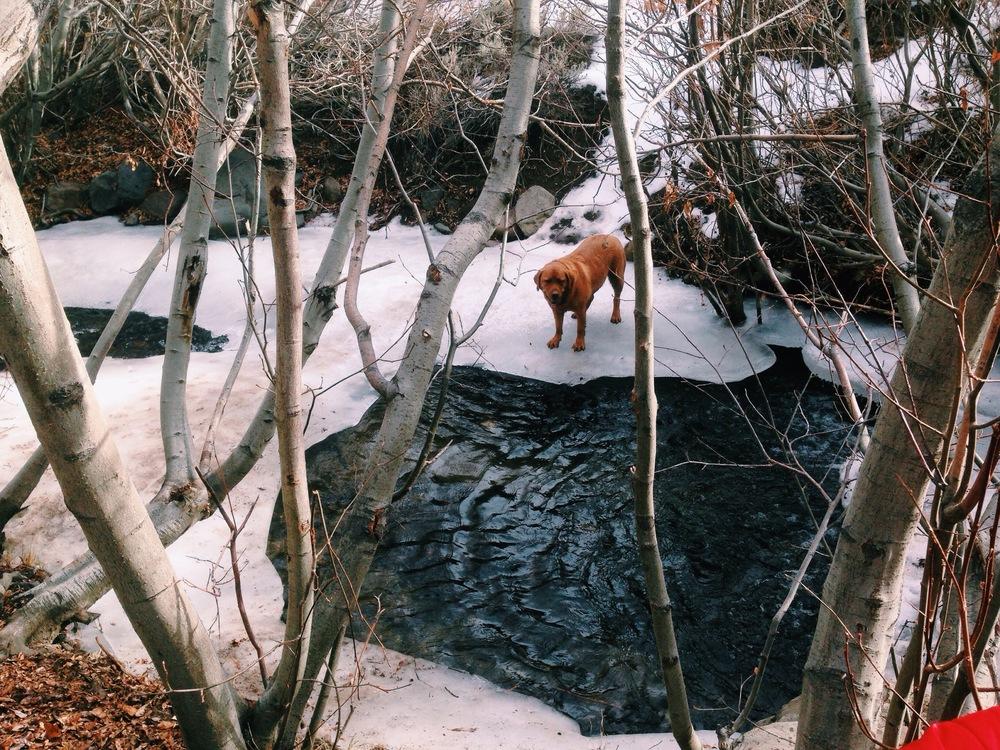 Frozen Creek Reno