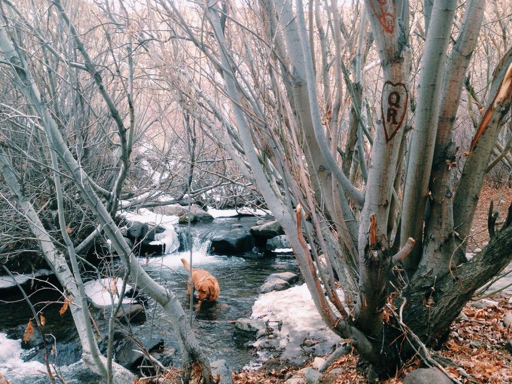 Cold Creek in Reno