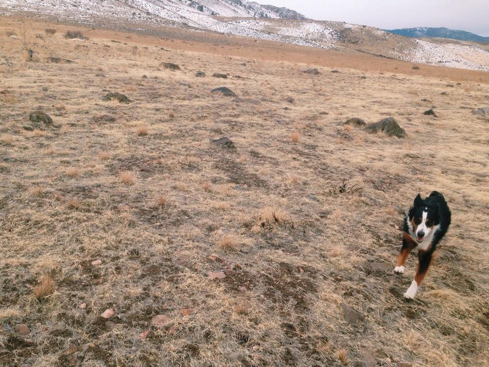 Running Dog in Reno