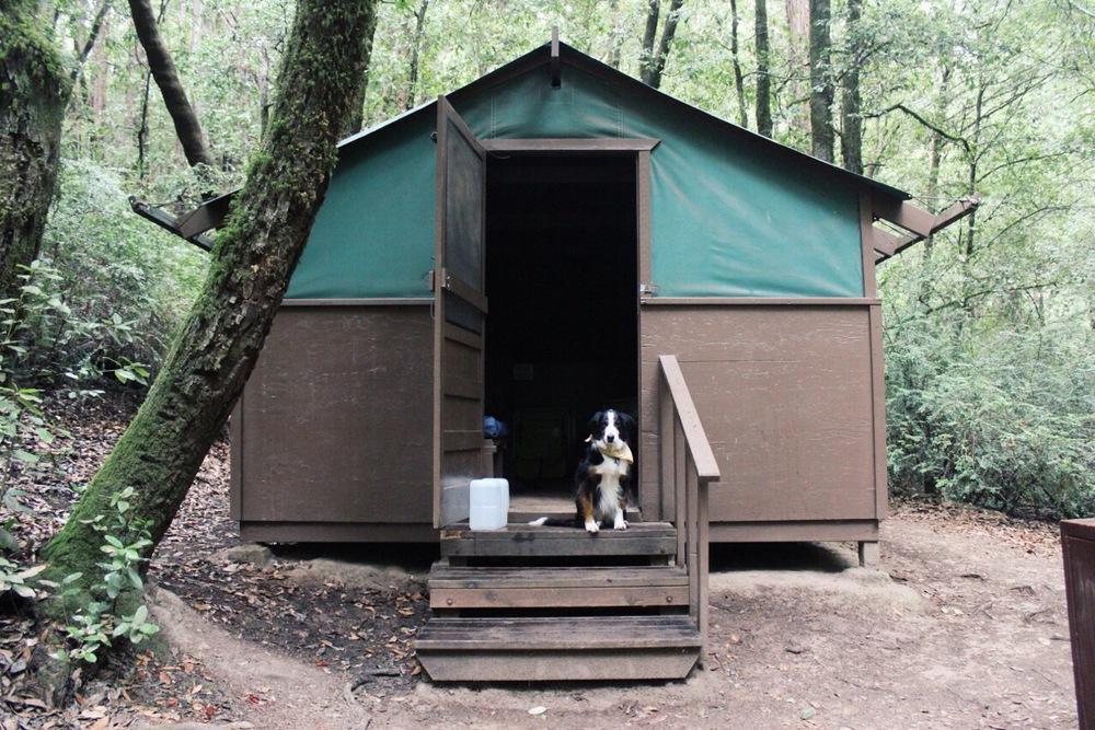 Big Basin State Park Tent Cabin