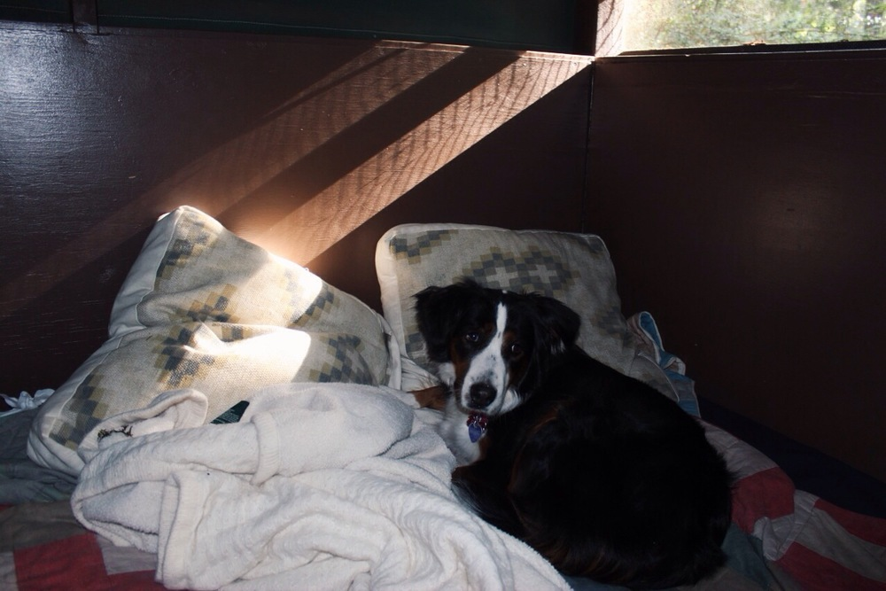 Dog in Big Basin Tent Cabin