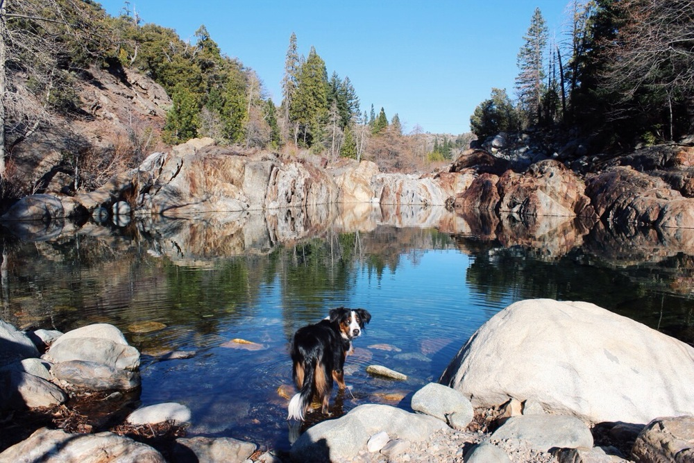 Dog in Yuba River