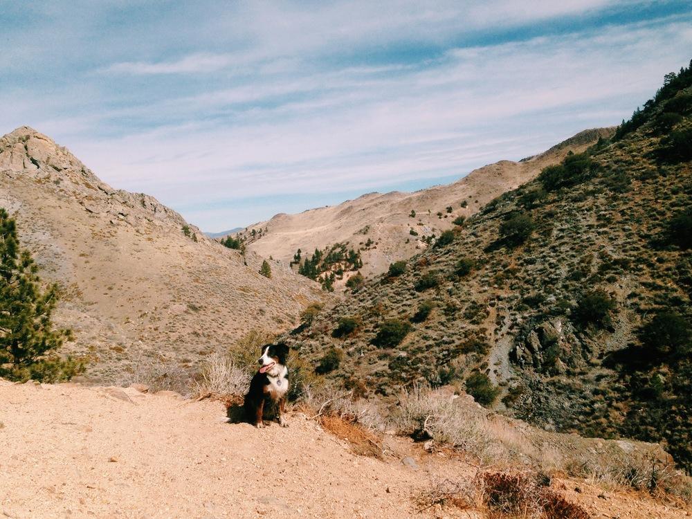 Hiking in Reno