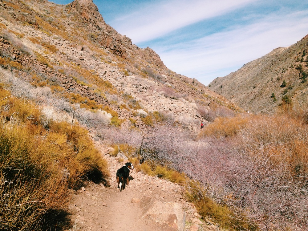 Dog Hikes in Reno