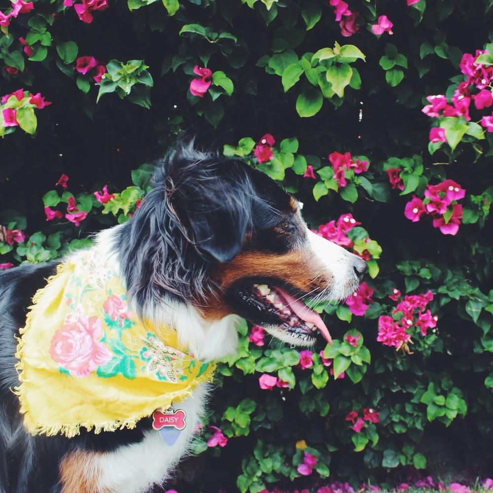 Dog Palm Springs