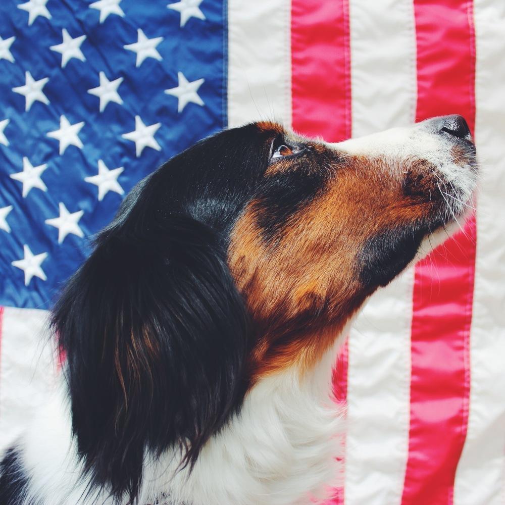 Daisy American Pride