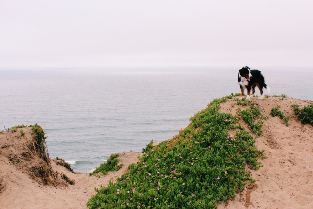 Fort Funston Dog Beach