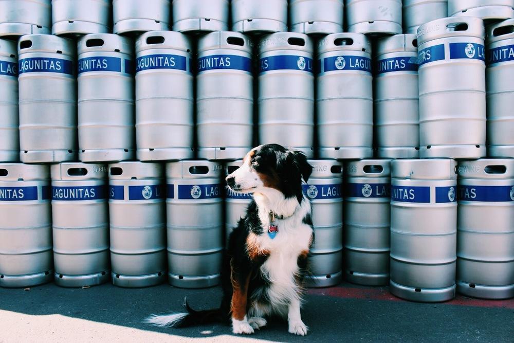 Lagunitas Brewery Kegs